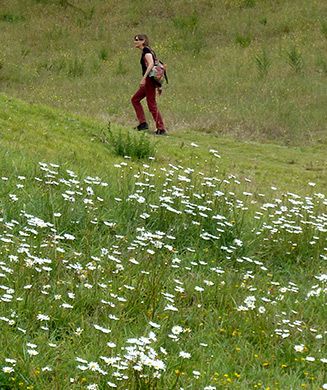 photo of woman walking in field