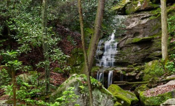 Spring forest with waterfall in West Virginia
